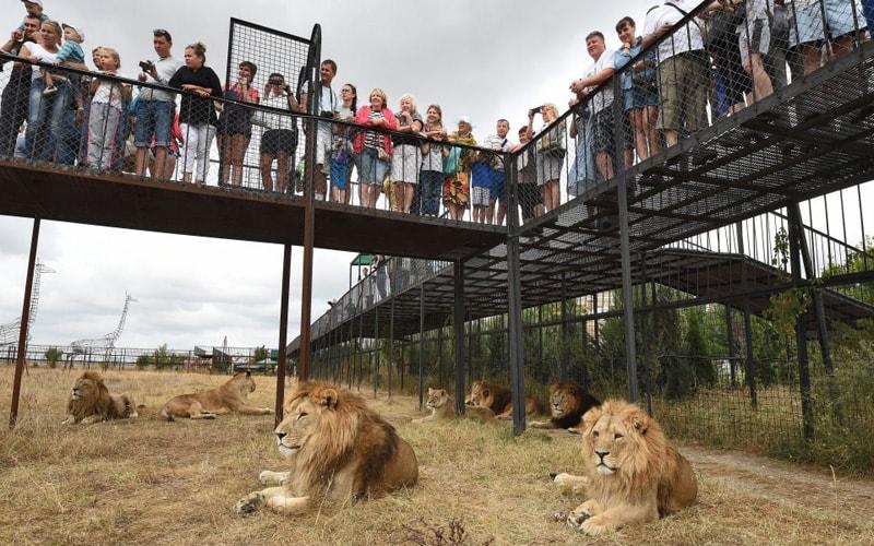 Экскурсия в парк львов Тайган из Феодосии