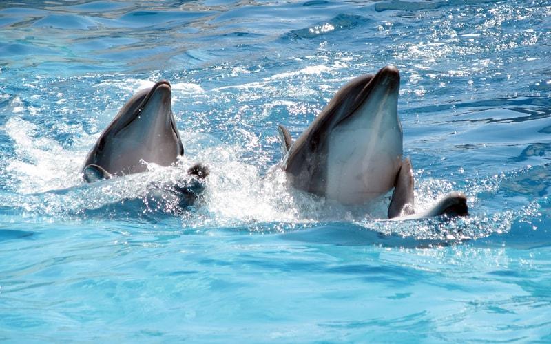 Экскурсия в дельфинарий в Коктебеле прямо из Феодосии