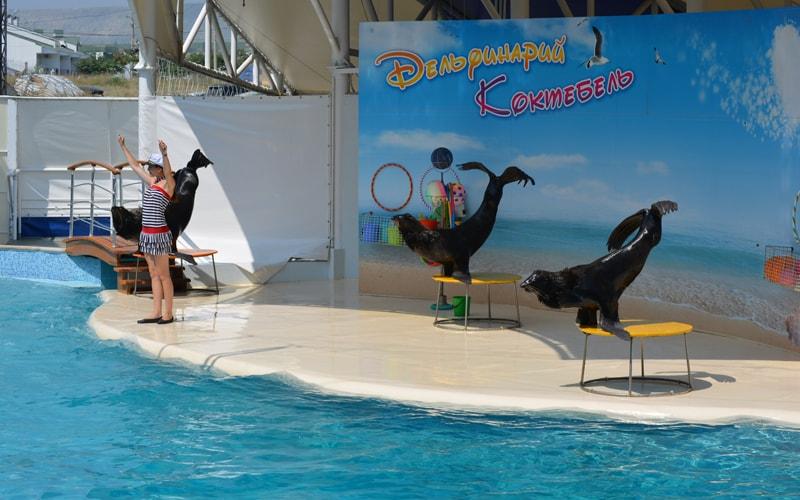 Экскурсия в дельфинарий в Коктебеле из Феодосии